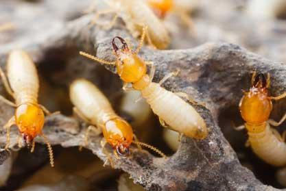 Masterkill Termite Control